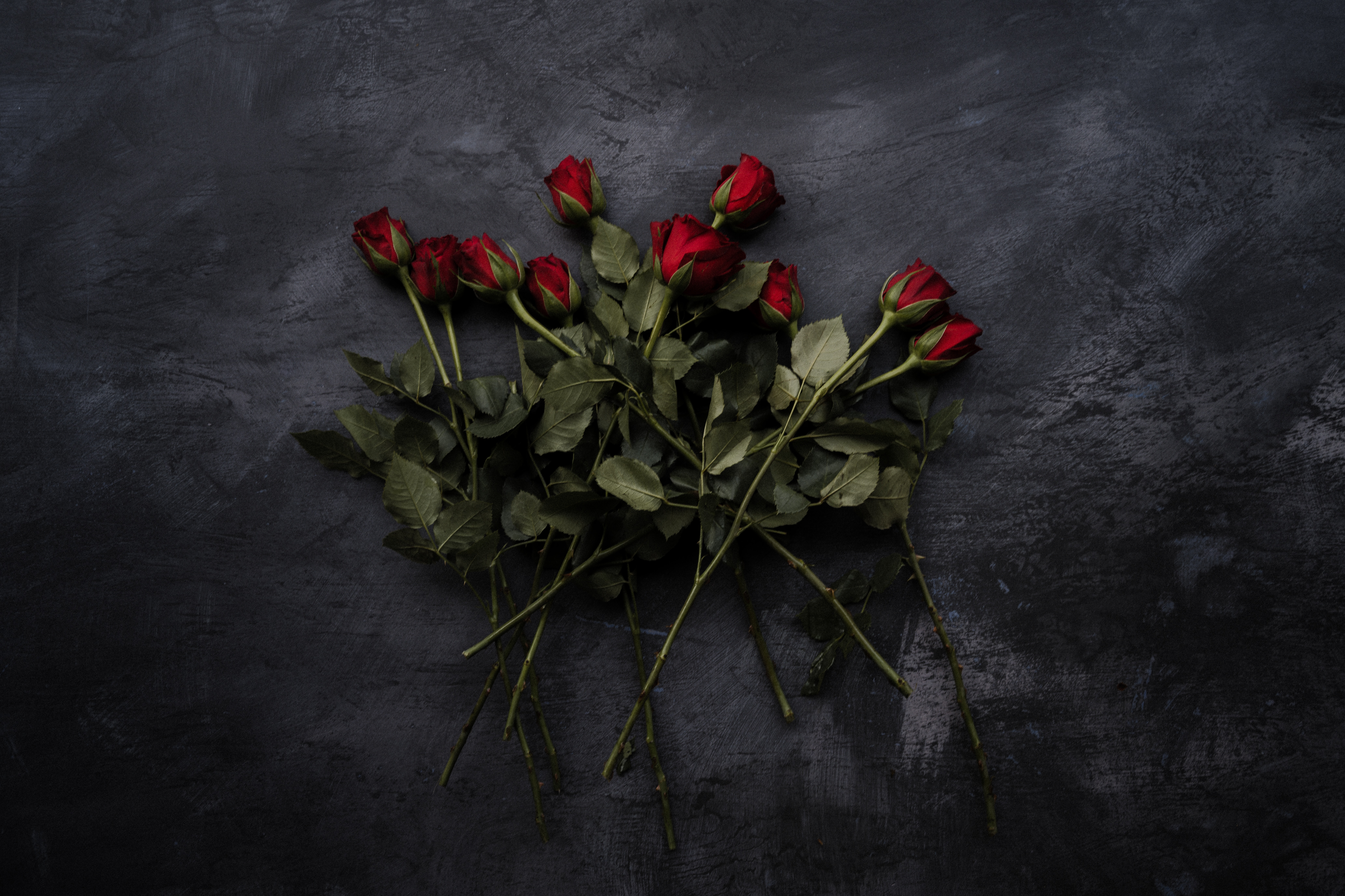 A pile of long-stemmed red roses against a chalky black background.